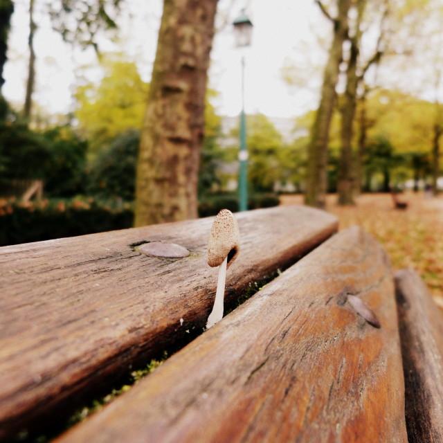 """Mushroom on the bench"" stock image"