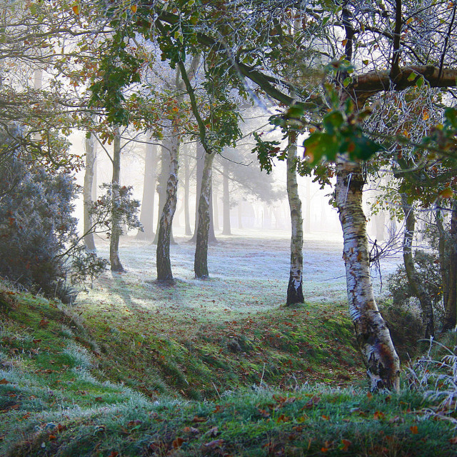 """Winter scene at Padworth in Berkshire"" stock image"