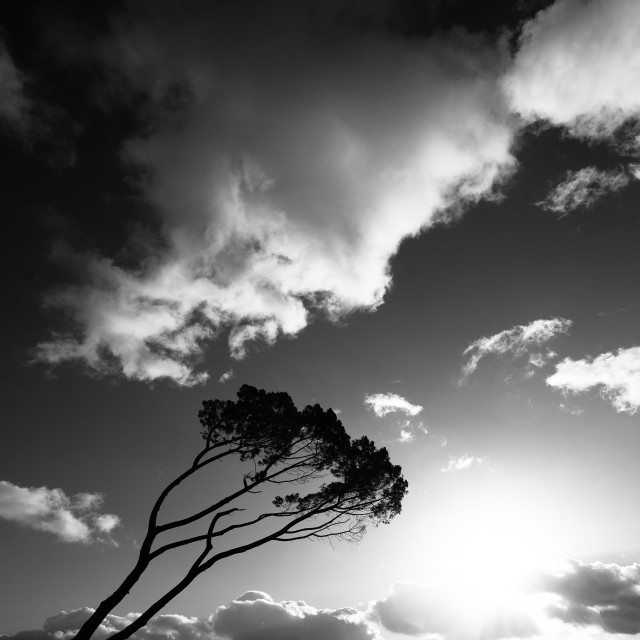 """""""Wind swept tree on South west of France"""" stock image"""