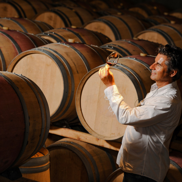 """Tourism - Man tasting wine in a cellar-Winemaker"" stock image"