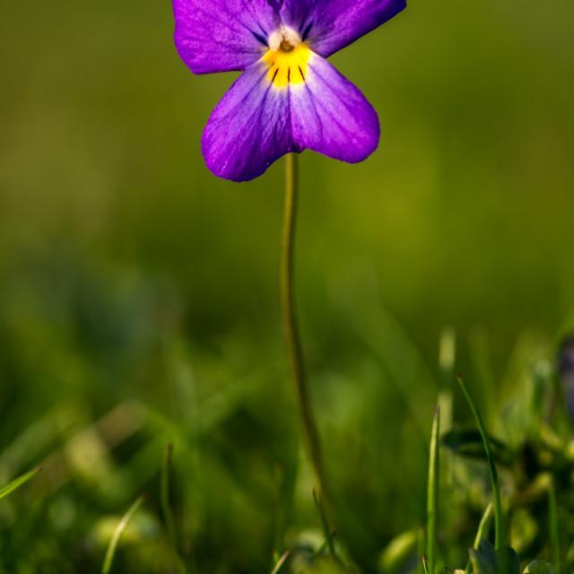 """""""Wildeflower"""" stock image"""