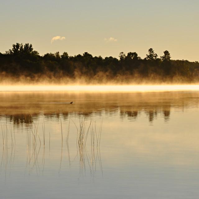 """Sunrise Swim"" stock image"