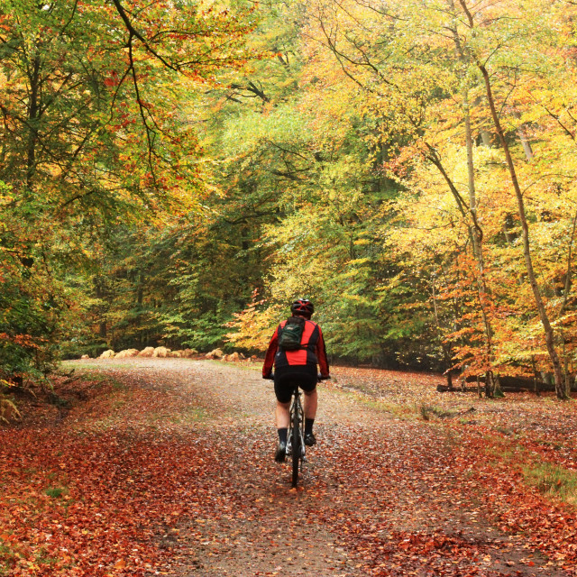 """""""Cyclist in Autumn Woods"""" stock image"""