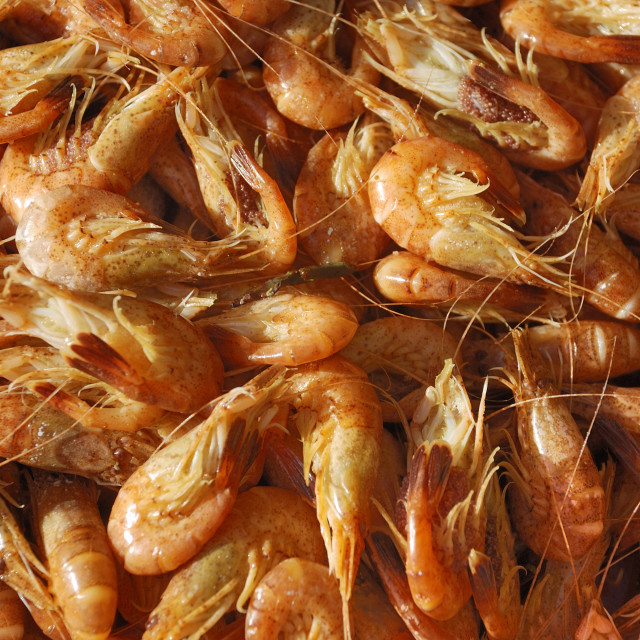 """Common Shrimp"" stock image"