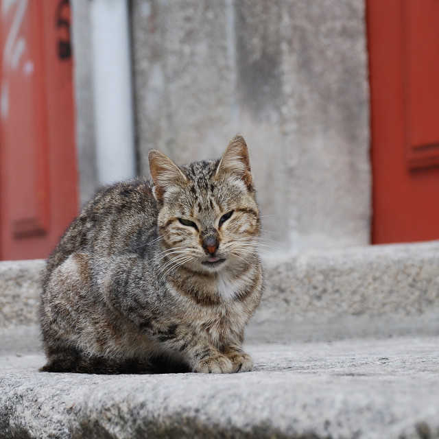 """""""Ugly street cat"""" stock image"""