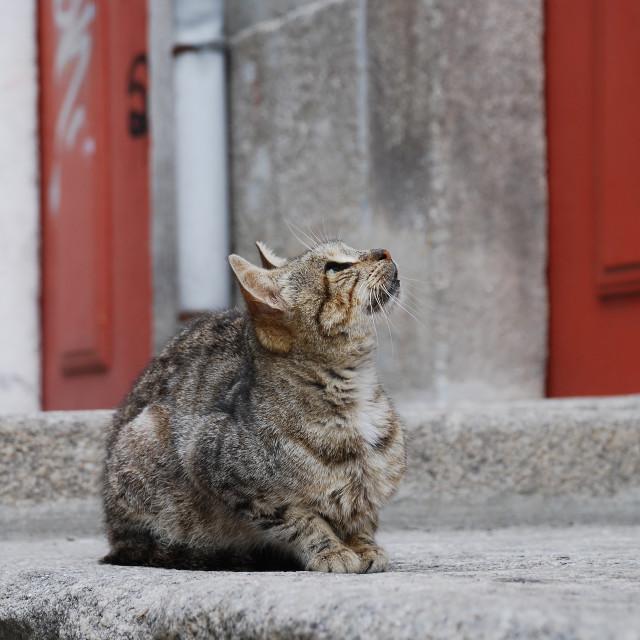 """""""Hopeful stray cat"""" stock image"""