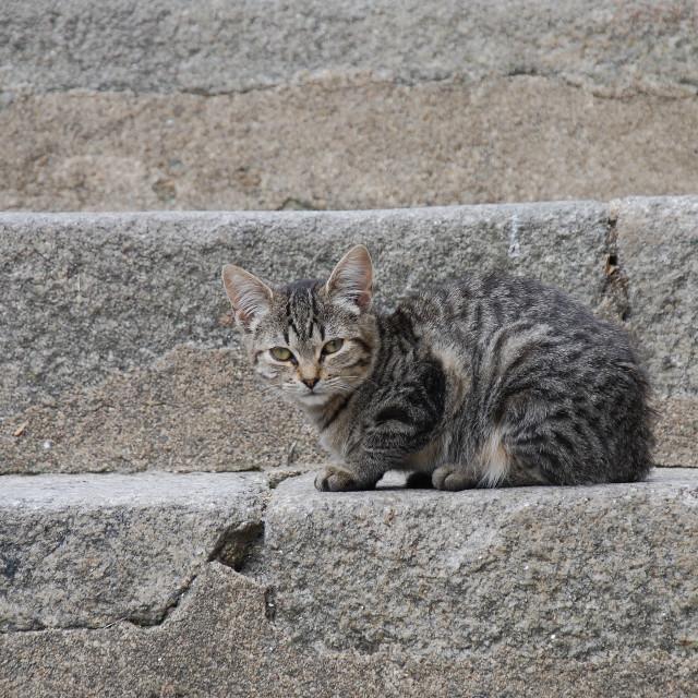 """""""Sad street kitten"""" stock image"""