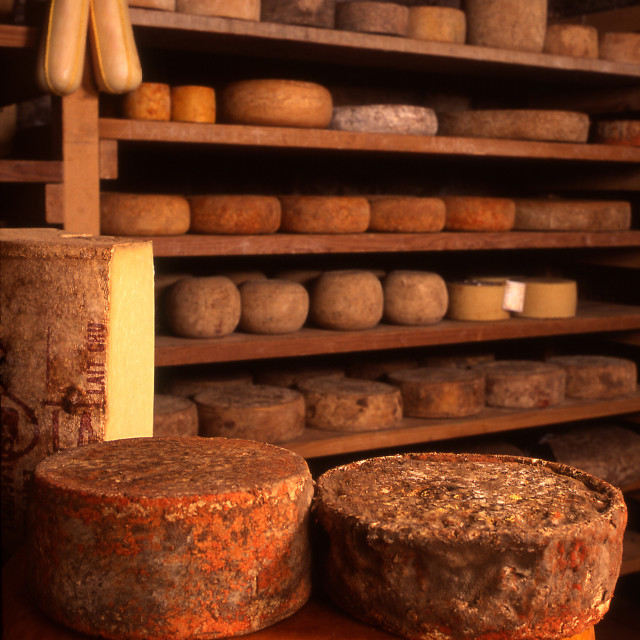 """Cheeses in producer's cave"" stock image"