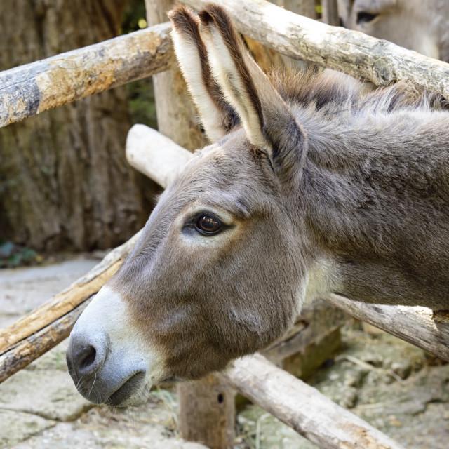 """""""Curious donkey"""" stock image"""