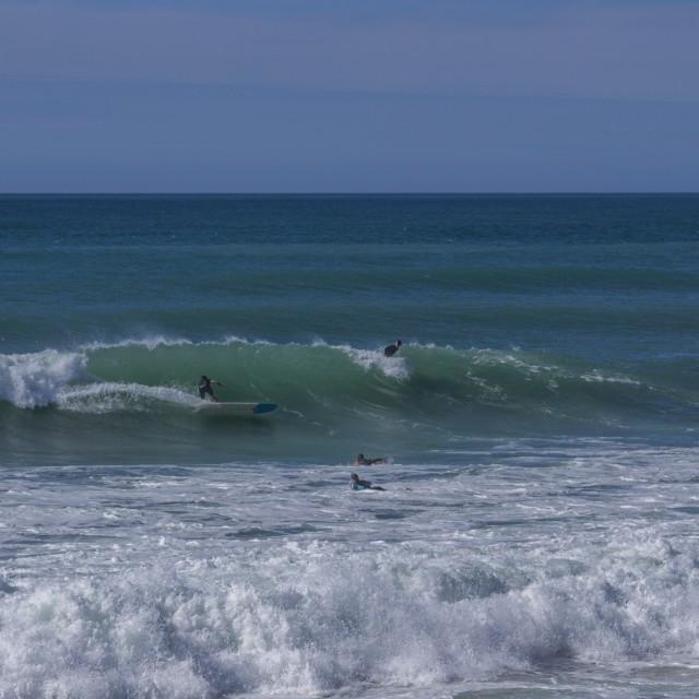 """""""Longboard surfer"""" stock image"""