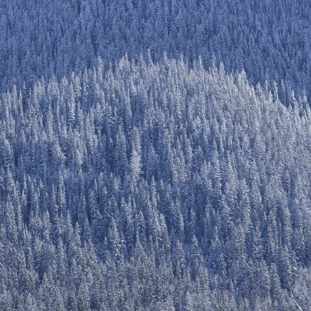 """Snow Covered Mountain Forest 1"" stock image"