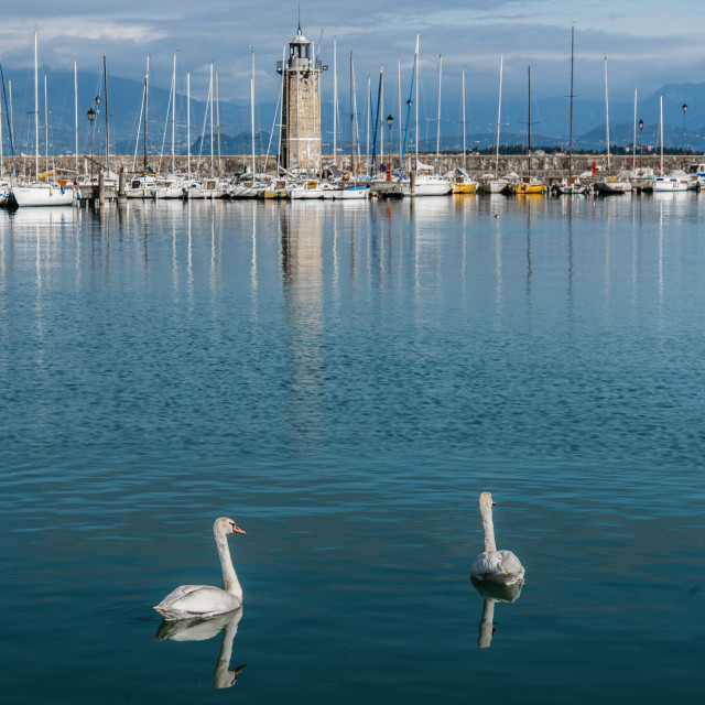 """Swans on Lake Garda"" stock image"