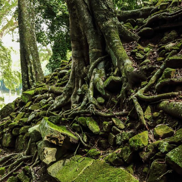 """Abandoned Mayan temples, Copan ruins, Honduras"" stock image"