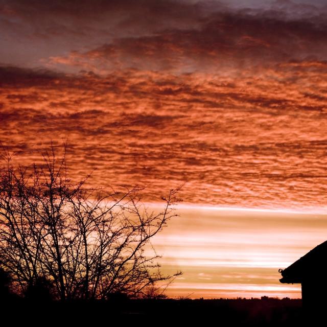 """""""Morning Glory"""" stock image"""