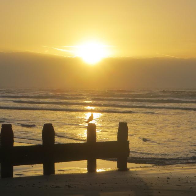 """December sunrise"" stock image"