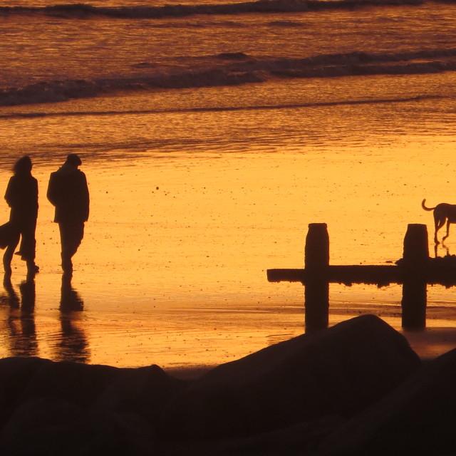 """""""Sunset dog walkers. December 2014"""" stock image"""