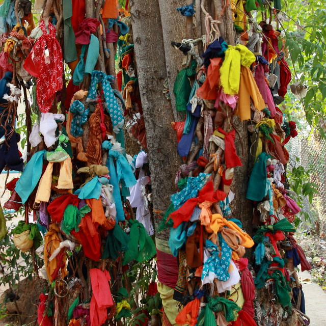 """Ficus worship"" stock image"