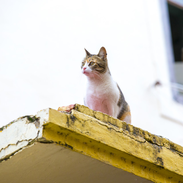 """""""Stray Feral Cat"""" stock image"""