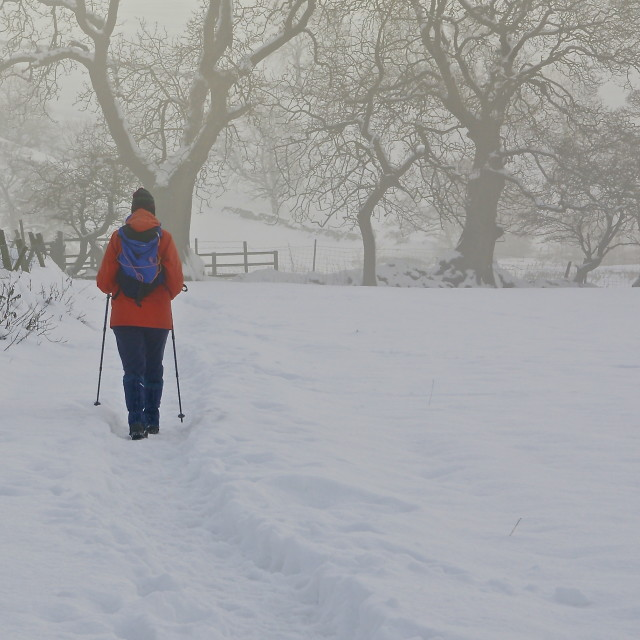 """""""Lone Walker in the Snow"""" stock image"""