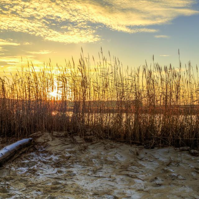 """Sunset through the Reeds"" stock image"