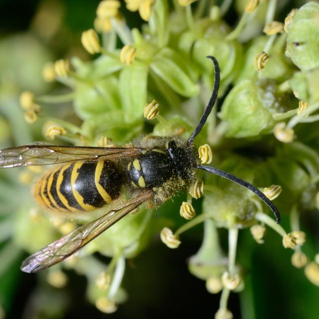 """""""Bee"""" stock image"""