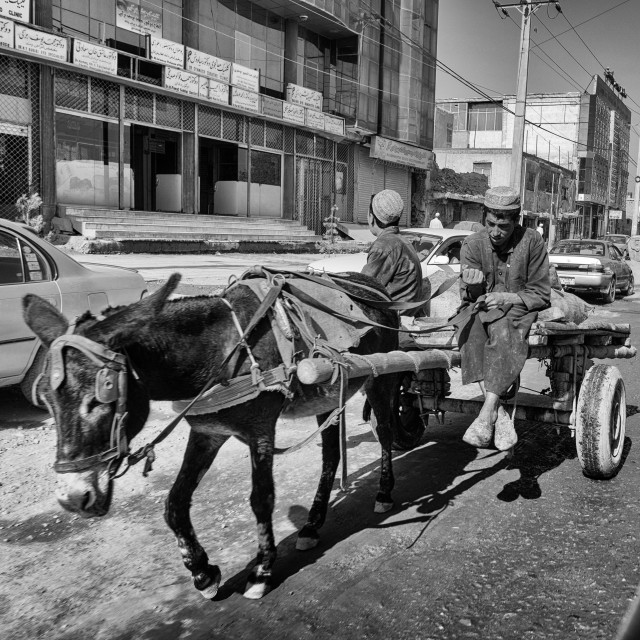 """Donkey and Cart"" stock image"