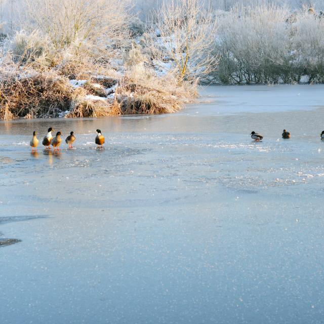 """Frozen Pond ."" stock image"