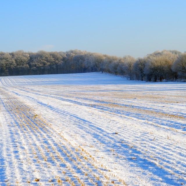 """Winter Landscape ."" stock image"
