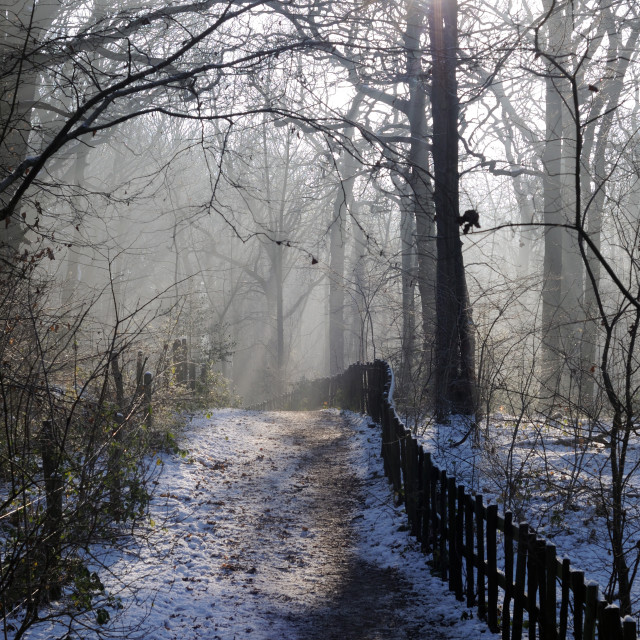 """Winters Woodlands."" stock image"