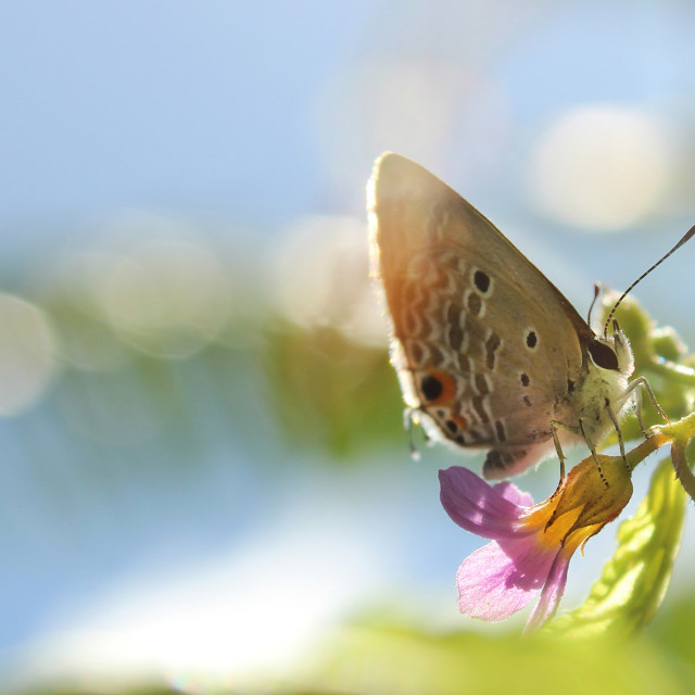 """""""Butterfly 1"""" stock image"""