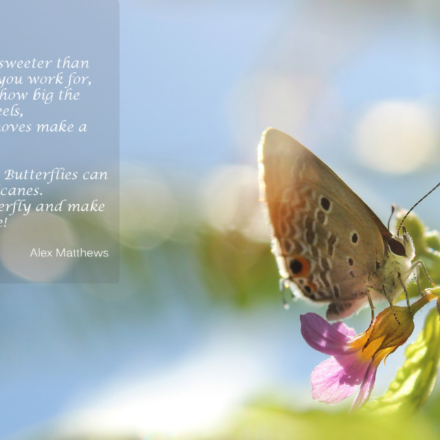 """""""Butterfly 1 + Quote"""" stock image"""