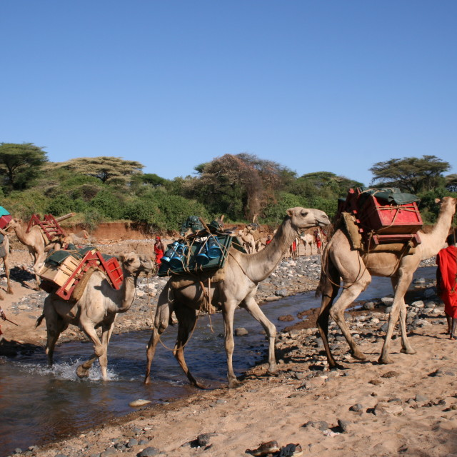 """Masai and camels in northern Kenya"" stock image"