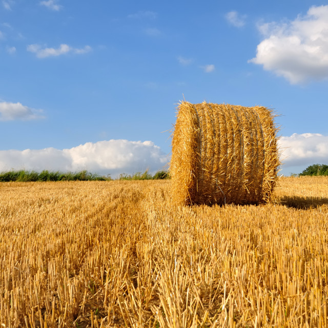 """straw bale in field"" stock image"