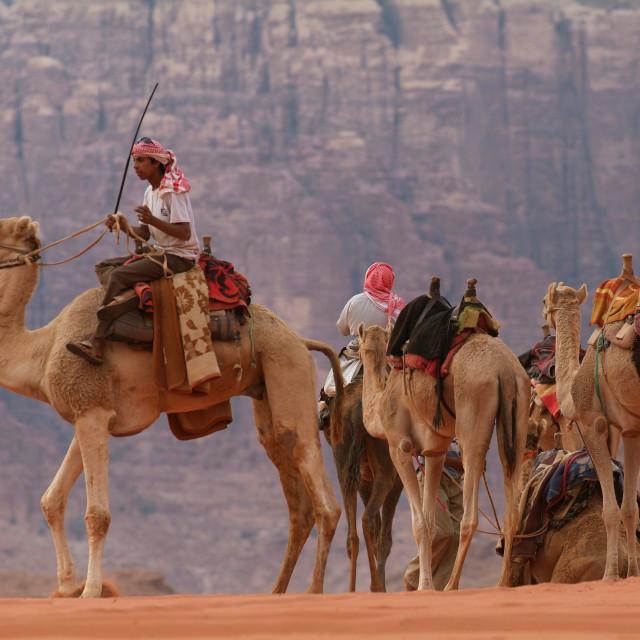 """""""Camels in Wadi Rum, Jordan"""" stock image"""