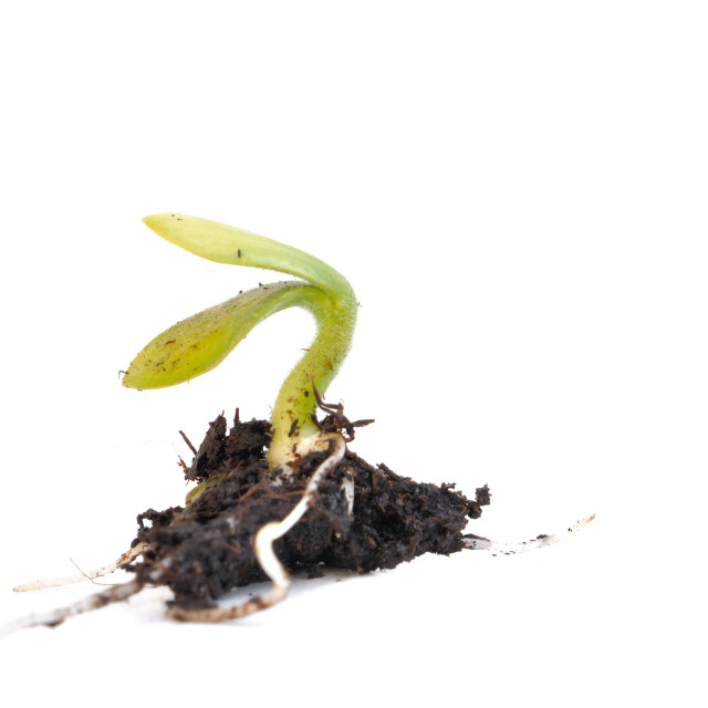 """seedling"" stock image"