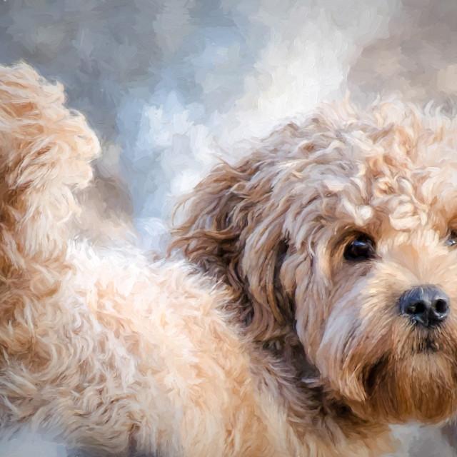 """Ganarascan dog"" stock image"