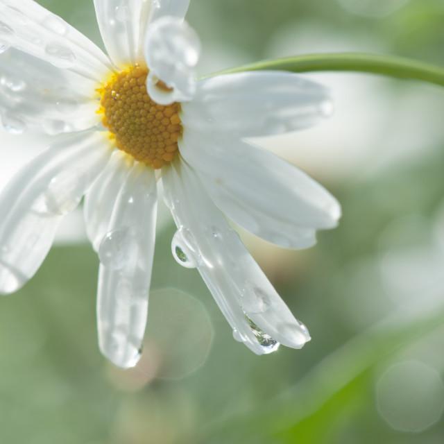 """April Showers"" stock image"