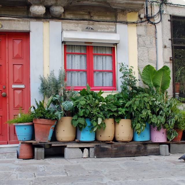 """Street garden"" stock image"