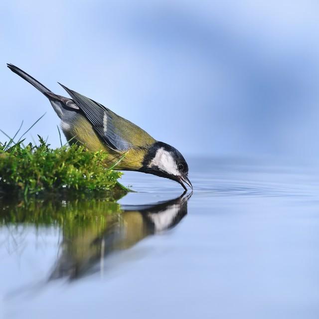 """Thirsty bird."" stock image"