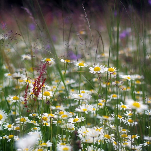 """Spring meadow"" stock image"