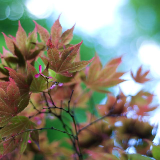 """""""Light Leaves"""" stock image"""
