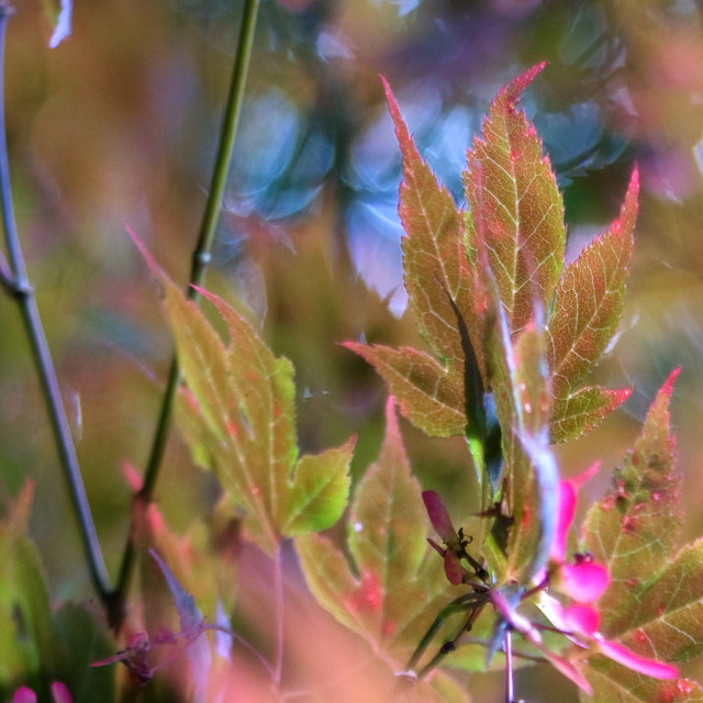 """Summer Leaves"" stock image"