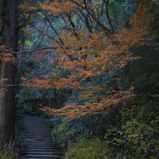 """Temple Steps in Autumn"" stock image"