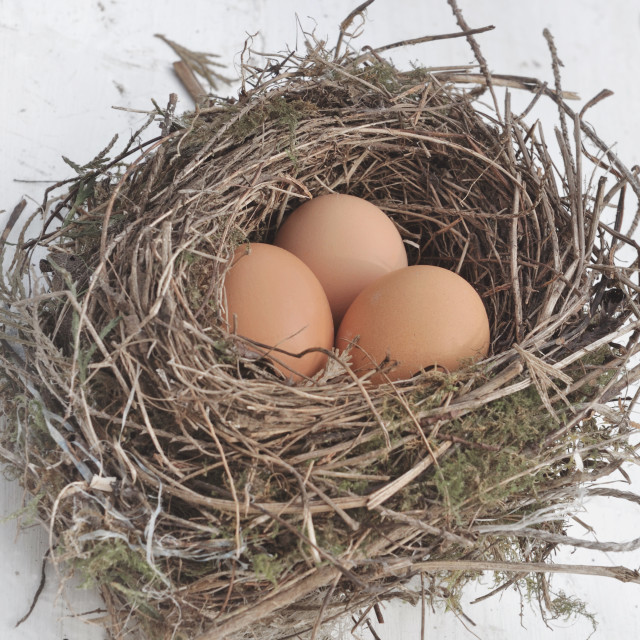 """eggs in nest"" stock image"