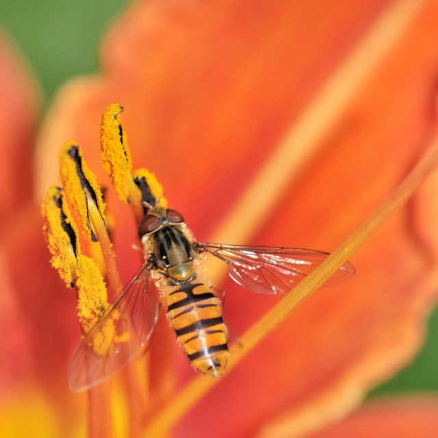 """insect on flower"" stock image"