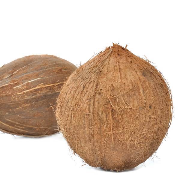 """coconut on white background"" stock image"