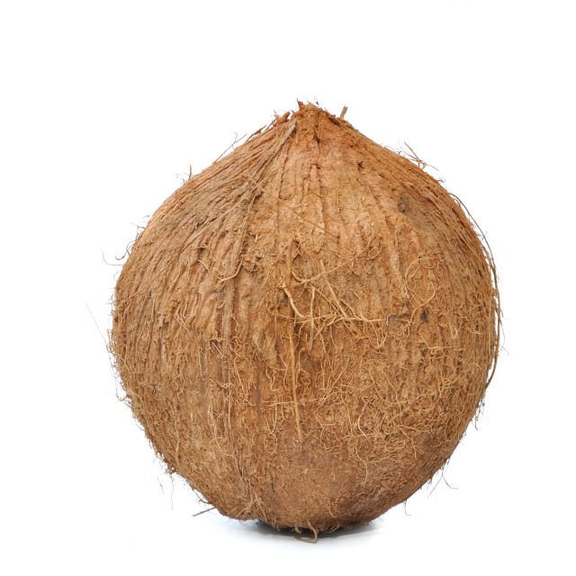 """""""coconuts isolated"""" stock image"""
