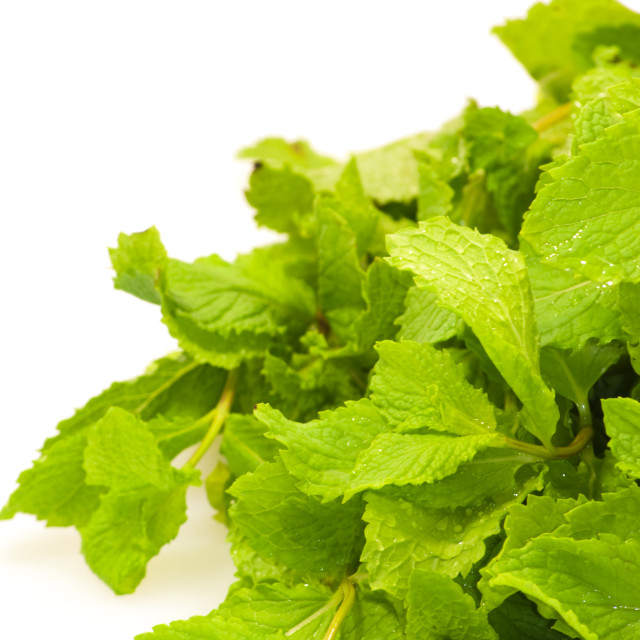 """""""Mint leaves"""" stock image"""