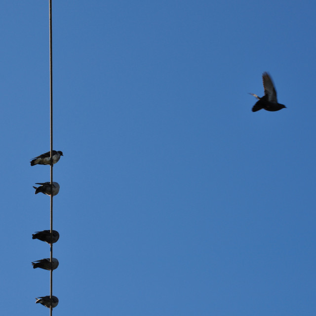 """birds blue sky"" stock image"