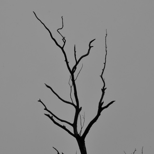 """tree branches dark winter day"" stock image"